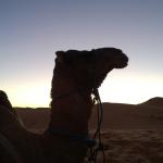 Camel~